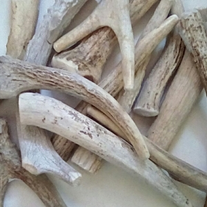 Antler Chew Treats for Dogs