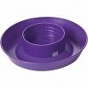 1-Quart Chick Waterer, Purple