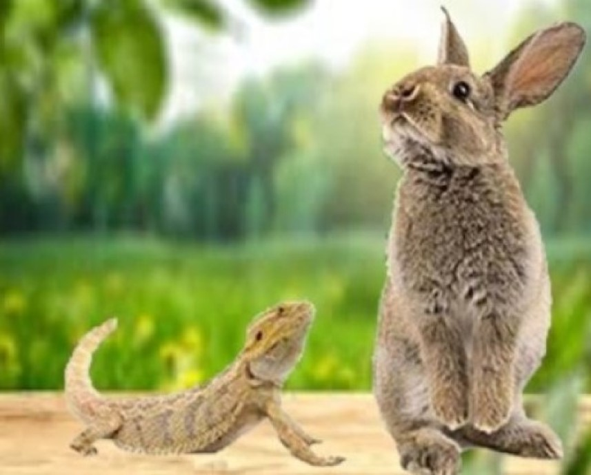 Rabbit and iguana dragon