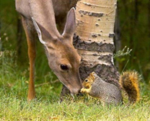 deer and squirrel2