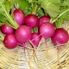 Radish Pink celebrantion