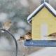 Attracting wild birds in winter