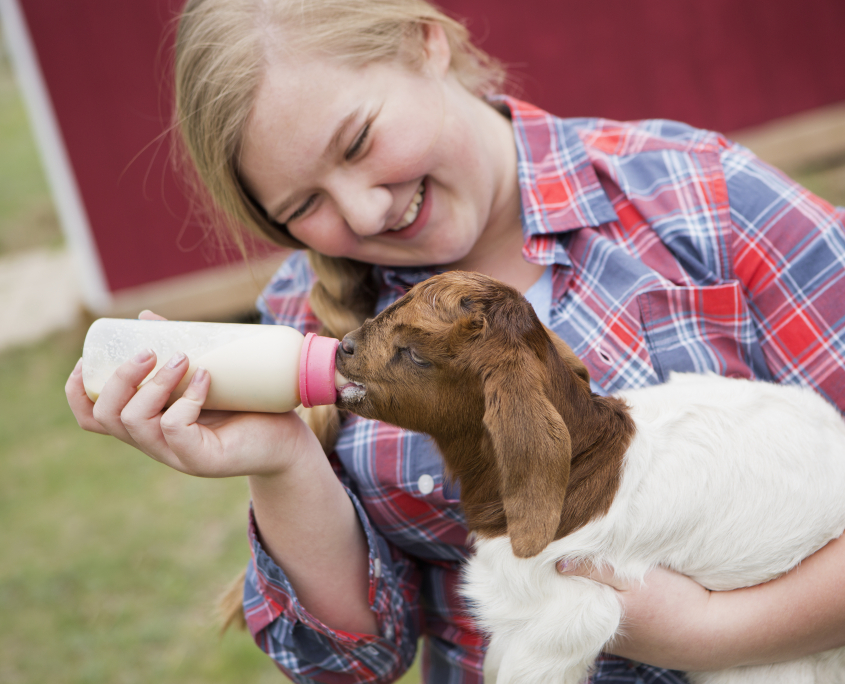 Milk replacers for baby goats