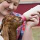 A girl nursing baby animals with milk replacer