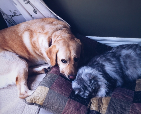 aging in dogs and cats
