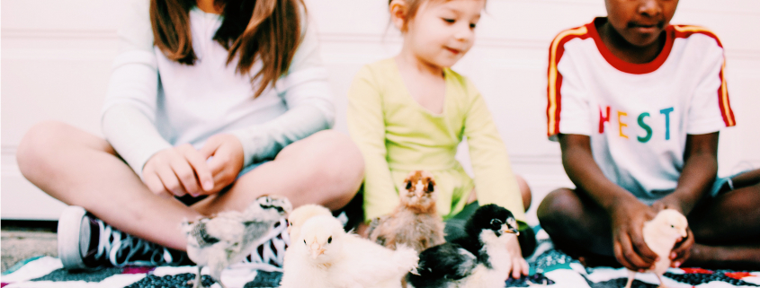 baby animials chicks with children