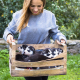 cute siberian puppy sitting in wooden box.