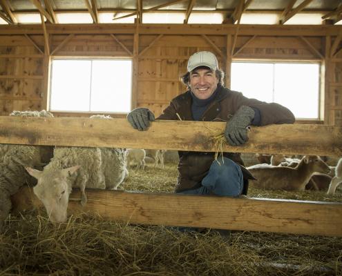 Organic Farm. Farmer and sheep in a pen.