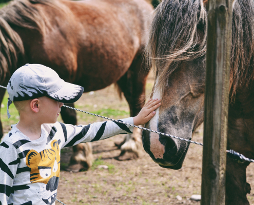 Horse healthy feed with boy