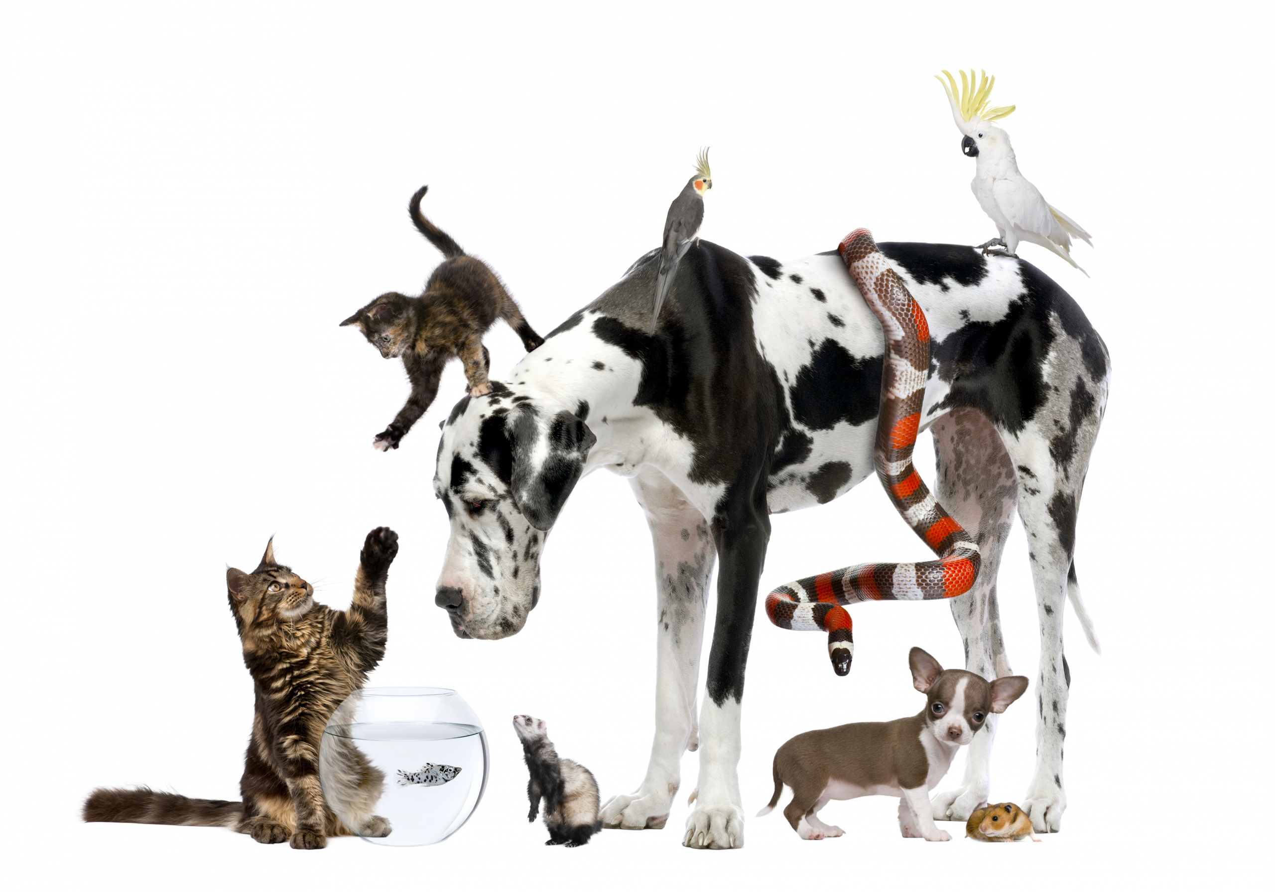 Pleasant Hill Pet & Livestock for all pet and livestock needs