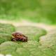 Ticks on a green leaf