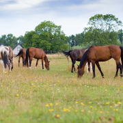 Horses protected by Equi Spot