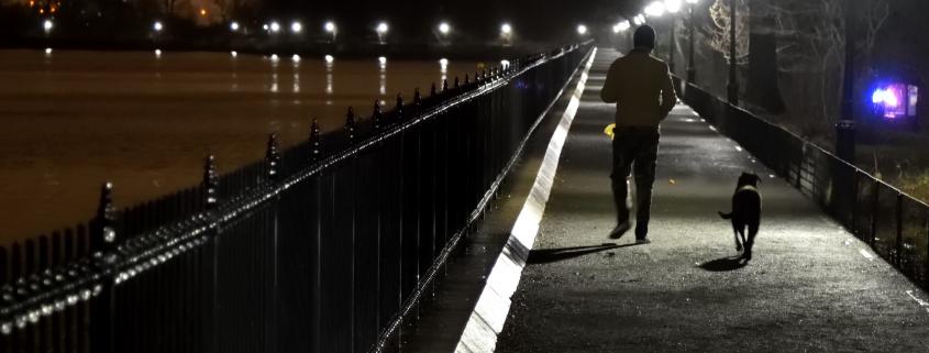 dog walking at night with collar